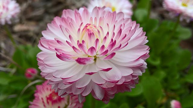 Daisy, Spring, Color, Multicolor, White, Pink, Nature