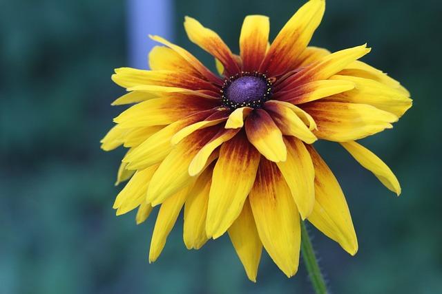Nature, Flower, No One, Plant, Summer, Petal, Color