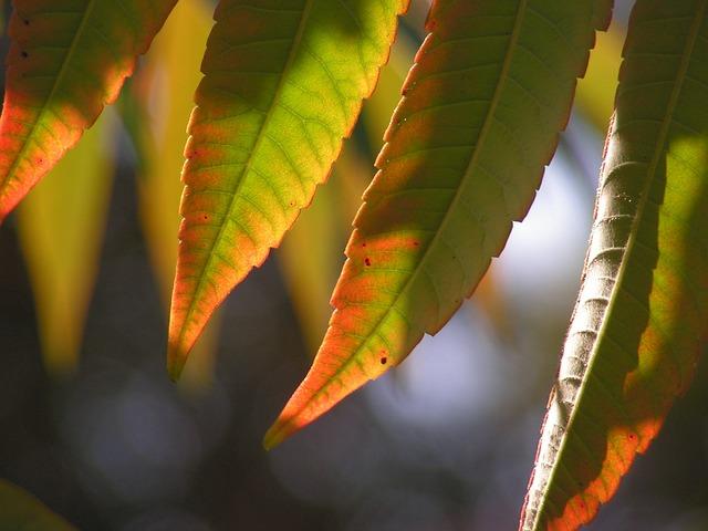 Leaves, Autumn, Poison Ivy, Color, Autumn Colors