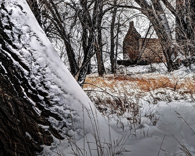 Robert Strauss, Cabin, Fort Collins, Colorado, Rural