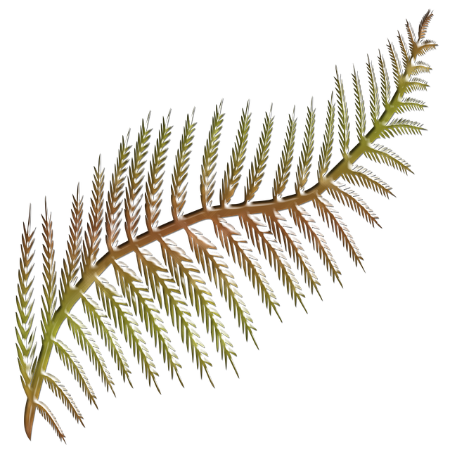 Flora, Fern Frond, Shape Stylised, Colored, Shape