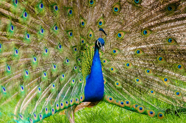 Animal, Animal Photography, Beautiful, Bird, Colorful