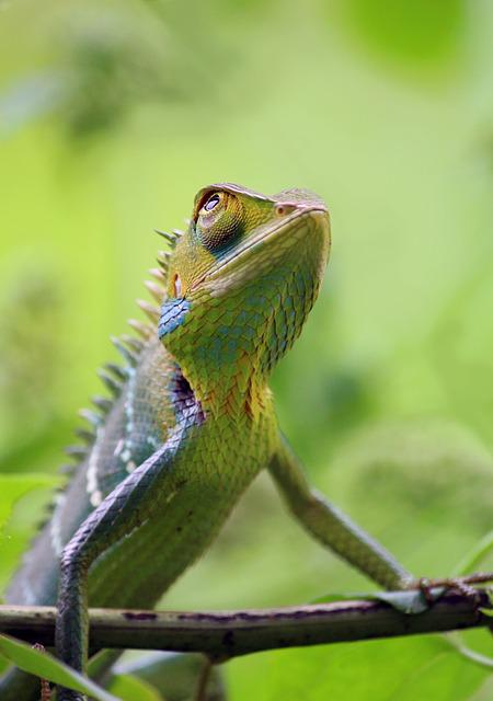 Chameleon, Animal, Wild, Wildlife, Nature, Colorful