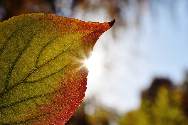 Leaf, Close, Back Light, Sun, Autumn, Colorful, Nature