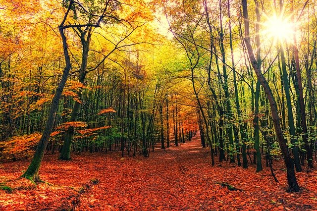 Autumn, Away, Leaves, Colorful, Sun, Nature, Forest