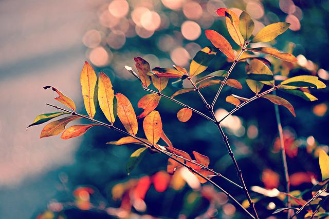 Autumn Leaf, Foliage, Branch, Twig, Colorful, Bright
