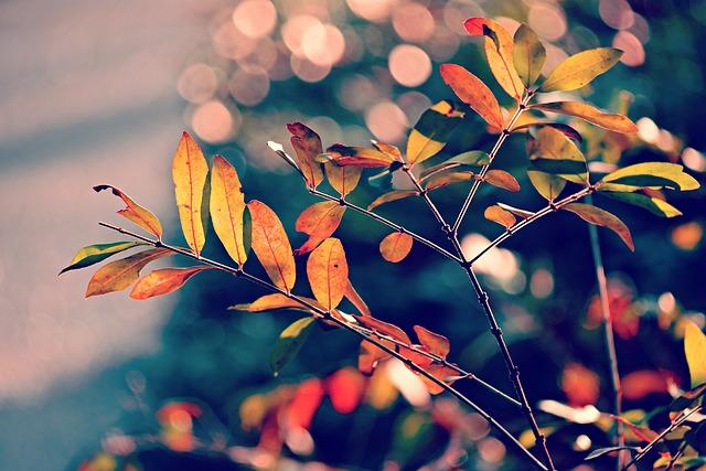 Autumn Leaf, Foliage, Branch, Twig, Colorful, Bright