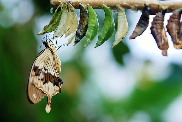 Brown, White Butterfly, Butterflies, Colorful, Insect