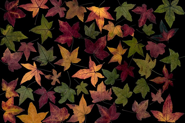 Leaves, Colorful, Amber Tree Leaf, Composition, Foliage