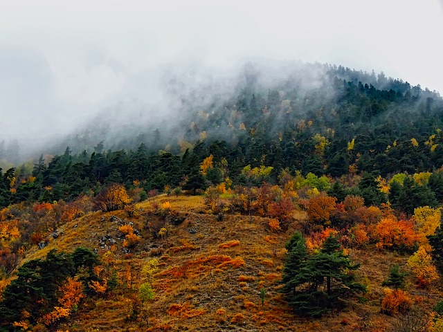 France, Fog, Autumn, Fall, Colors, Colorful, Forest