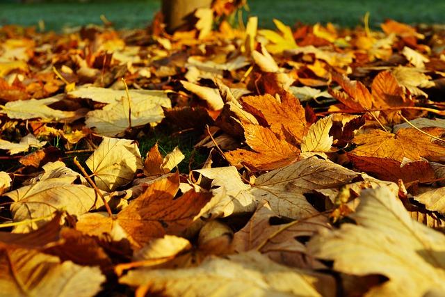 Leaves, Late Autumn, Colorful, Fall Color, Emerge