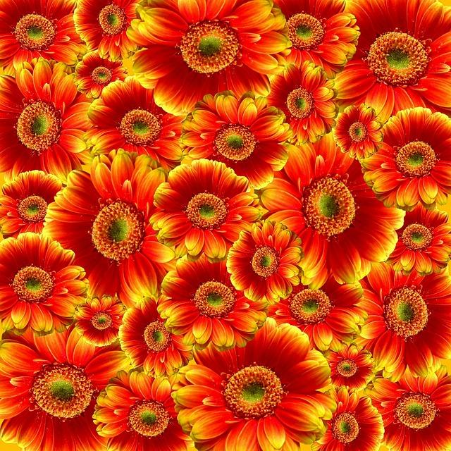 Gerbera, Flowers, Nature, Plant, Colorful, Cut Flowers
