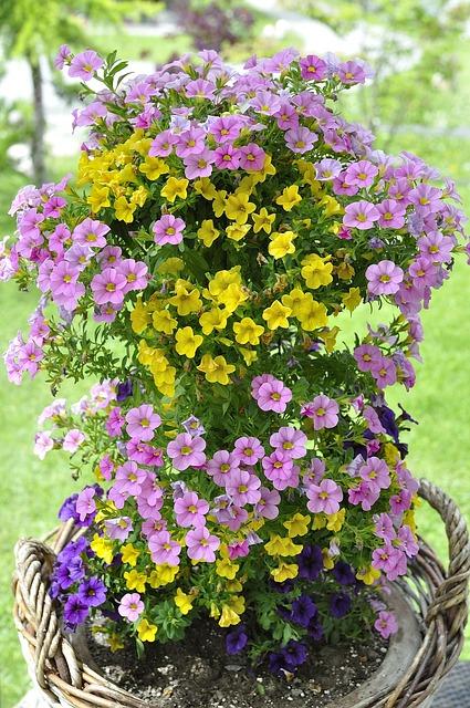 Zauberglockchen, Flower Plant, Flowers, Colorful