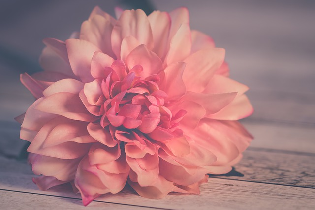 Flower, Rose, Nature, Nice, Flowers, Colorful, Bloom