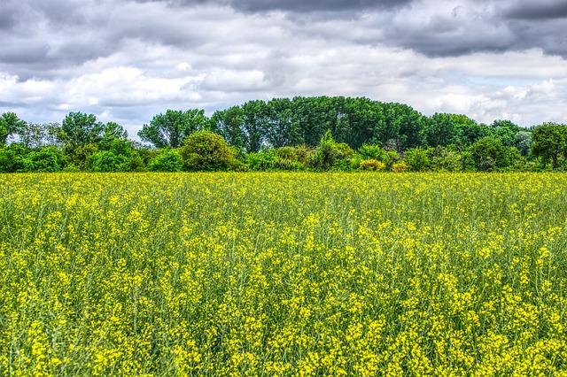 Meadow, Flowers, Flower Meadow, Spring, Bloom, Colorful