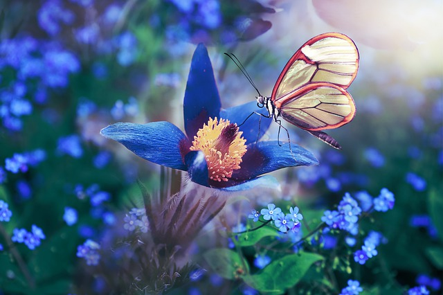 Butterfly, Flowers, Wing, Blue, Colorful, Spring