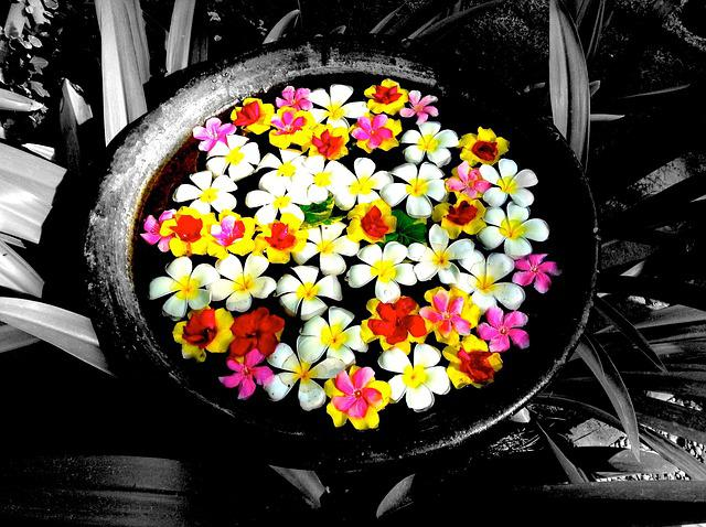 Flowers, Gift, Welcome, Colorful