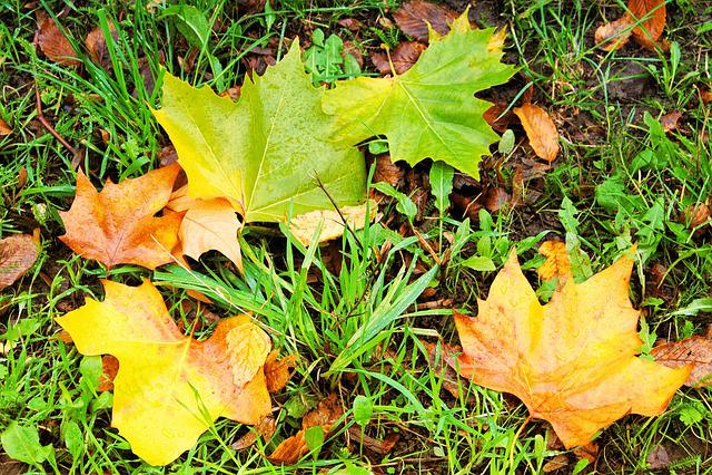 Fall Foliage, Leaves, Colorful Leaves, Autumn