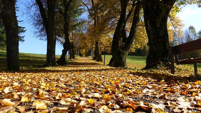 Allgäu, Autumn, Leaves, Trees, Colorful