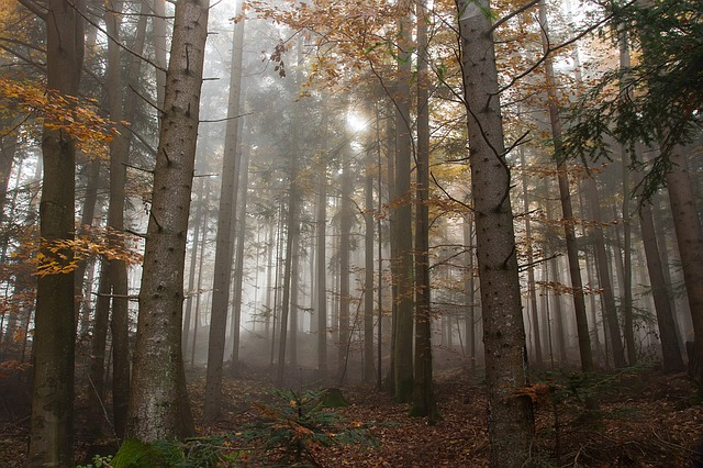 Autumn, Fog, Colorful Leaves, Nature, Landscape, Forest