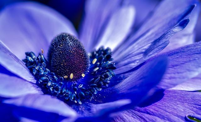 Flower, Plant, Purple, Colorful, Closeup, Macro, Garden