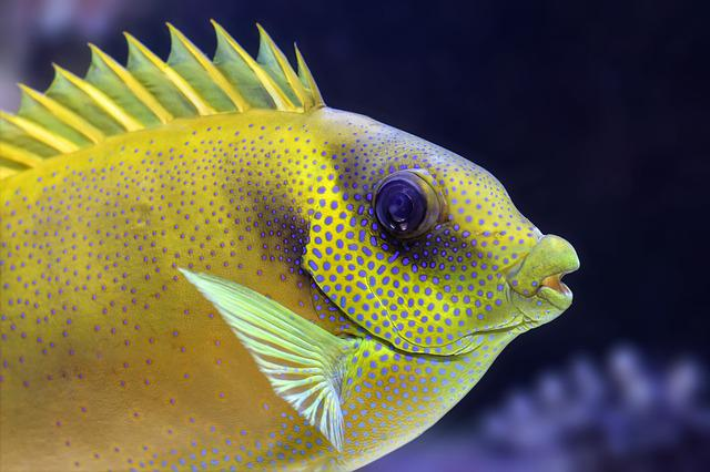Fish, Fin, Aquarium, Tropical, Yellow, Colorful, Animal