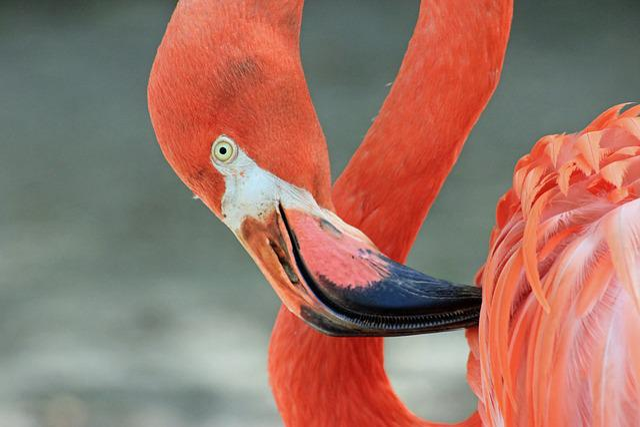 Flamingo, Bird, Nature, Exotic, Tropical, Colorful