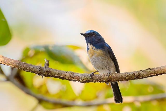 Nature, Birds, Colors