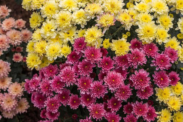 Flowers, Chiang Mai Thailand, Colors
