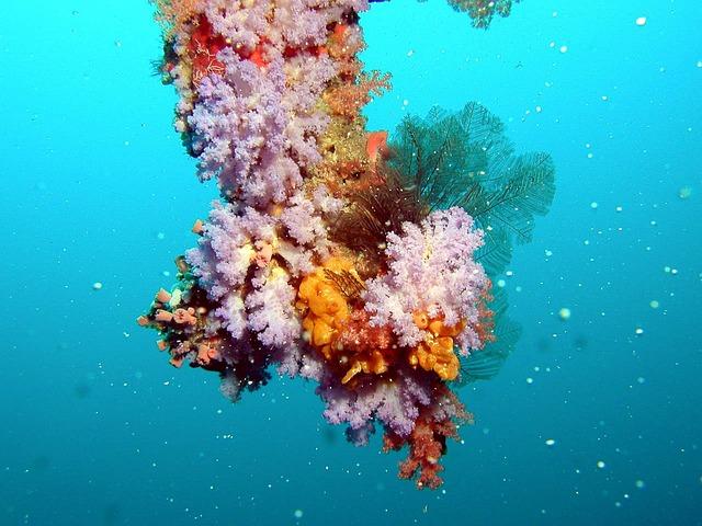 Maldives, Underwater, Coral, Colors, Sea