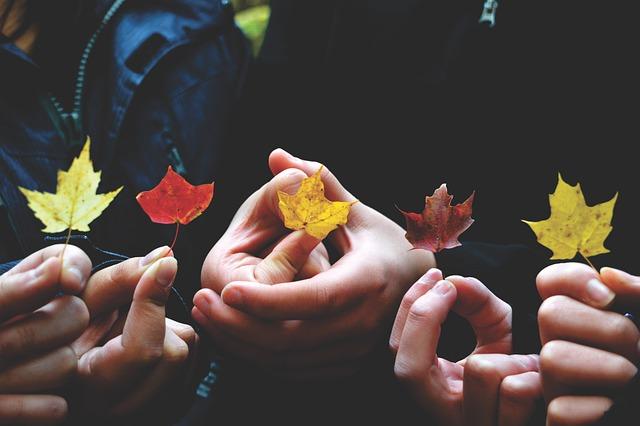 Autumn, Autumn Leaves, Colors, Colours, Dry Leaves