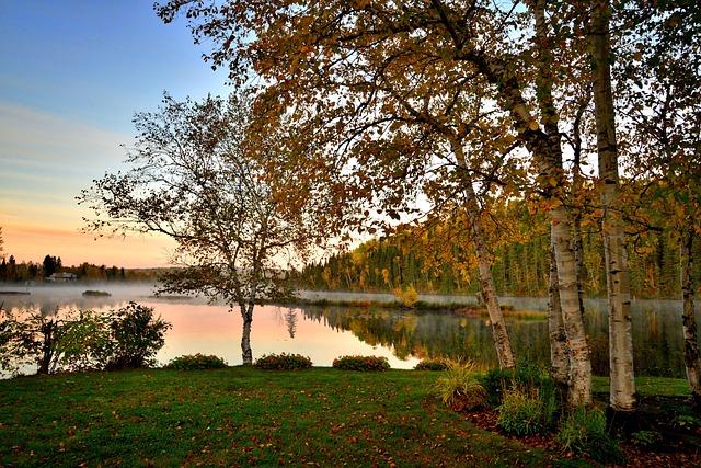 Autumn Landscape, Nature, Trees, Birch, Colors, Foliage