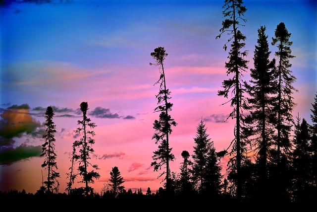 Landscape, Colors, Trees, Nature, Sky, Red, Blue