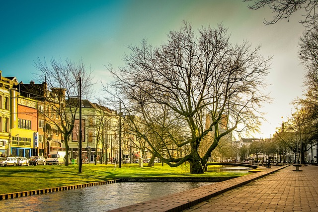 Rotterdam, Green, Tree, Sunlight, Colors, Plant