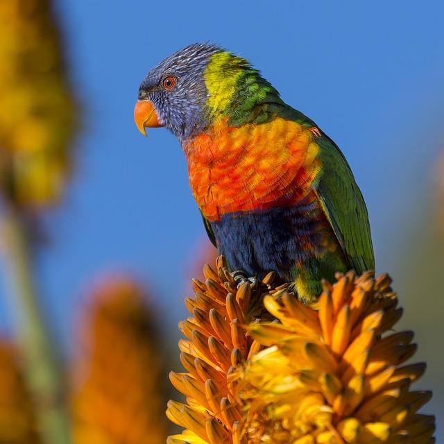 Animal, Bird, Colorful, Colourful, Flower, Macro