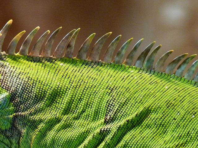 Comb, Iguana, Green, Lizard, Kaltblut, Reptile, Animal