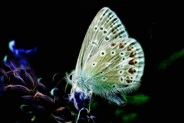 Fractalius, Butterfly, Common Blue, Nature, Insect
