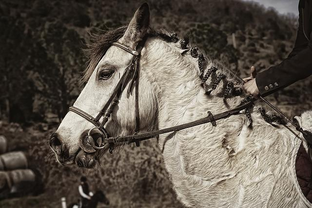 Ridings, Competitions, Equestrian, Sport, Horse