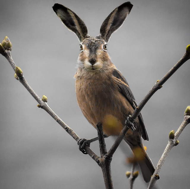 Animal World, Nature, Animal, Easter, Composing, Cute