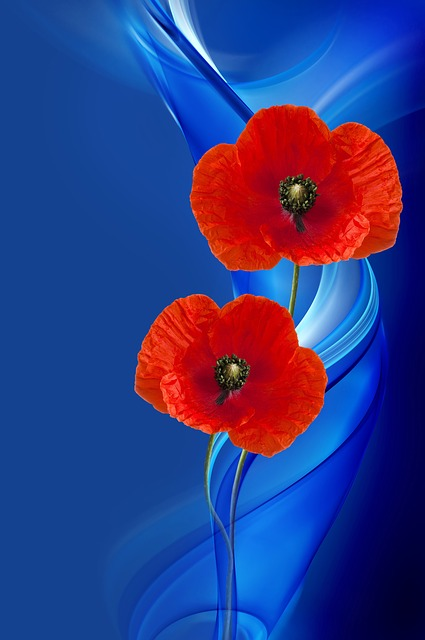 Poppy, Poppy Flower, Composing, Design, Red, Blue
