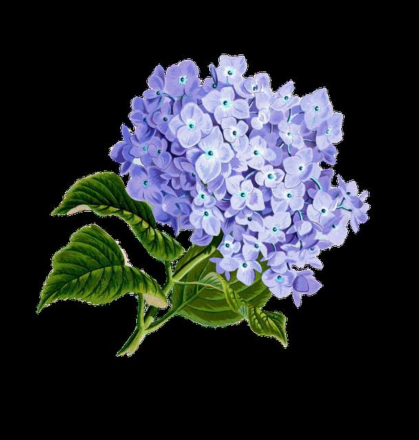Flower, Purple, Plan, Pretty Vintage, Composition
