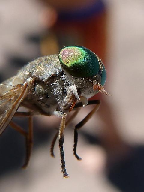 Horsefly, Compound Eye, Tabanid, Insect Eye, Sting