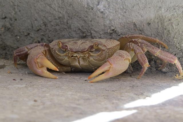 Crab, Crustacean, Concealed