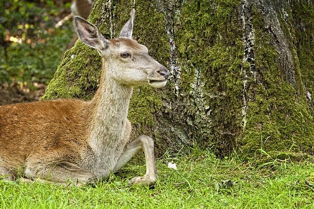 Deer Park, Doe, Animal, Concerns, Tree