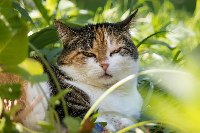 Cat, Lucky Cat, Domestic Cat, Mieze, Cat Face, Concerns