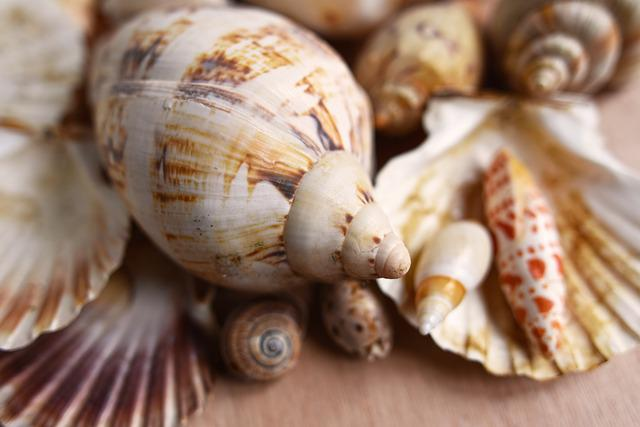 Seashells, Mollusk, Scallop, Conch, Spiral, Clam