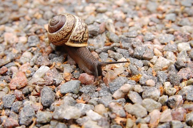 Snail, Stones, Mollusc, Conch, Slow