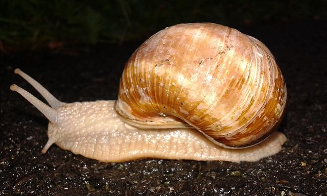 Nature, Snail, Worm, Conch, Snail Shell, Mollusk