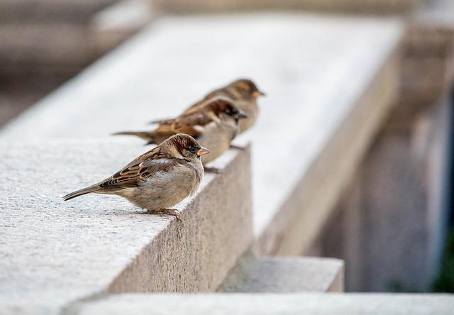Nature, Bird, Three, Flying, Concrete