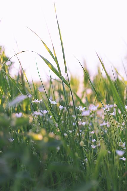 Cones-milk Star, Flowers, Nature, White, Bloom, Plant